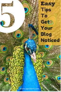 5 Easy Tips to get your blog noticed