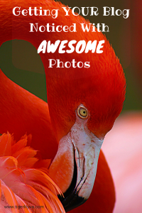 Getting YOUR Blog Noticed With AWESOME Photos