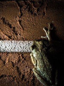 Blogphoto.tv frog at the finish line